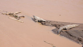 Große Krokodile in Costa Rica Lizenzfreie Stockfotografie