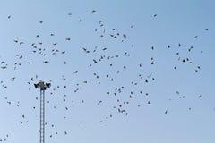 Große Menge von Vögeln im Himmel Stockbild
