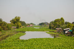 Große Menge Wasserhyazinthen schwimmen auf Kanal Stockfotos