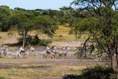 Große Migration in Serengeti Tanzania, Afrika stockfotografie