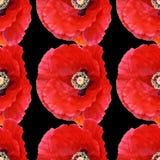 Große Mohnblumen des nahtlosen abstrakten Hintergrundmusters Stockfotografie