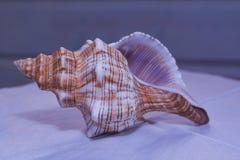 Große Muschel auf weißer Serviette stockfotos
