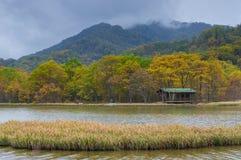 Große neun Seen von Wald Hubeis Shennongjia Lizenzfreie Stockfotografie