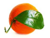 Große Orange mit Blatt Stockfotografie