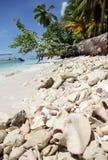 Große Ozeanoberteilrosaperle Strombus gigas und die Koralle, die auf einem karibischen Strand des weißen Sandes auf Saona-Insel l stockfoto