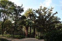 Große Palmen stockfoto