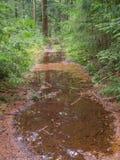 Große Pfützen auf Waldweg lizenzfreies stockbild