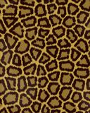Große Punkte des Leoparden schließen Pelz kurz Lizenzfreie Stockbilder