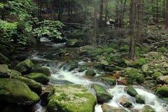Große rauchige Berge Nationalpark, Tennessee, USA Lizenzfreie Stockfotografie