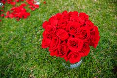 Große Rosen auf dem Gras Stockfoto