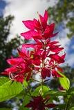 Große rote Blume Stockfoto