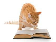 Große rote Katze, die ein Buch liest Stockfotografie