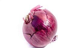 Große rote Zwiebeln eine, die schauen, um Schnitt zu erhalten Lizenzfreie Stockfotos