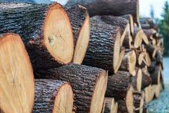 Große Runde cutted Brennholzstücke lizenzfreie stockfotografie
