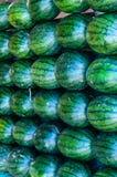 Große süße grüne Wassermelonen Stockbilder