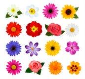 Große Sammlung bunte Blumen. Lizenzfreie Stockfotos
