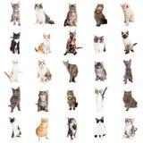 Große Sammlung Katzen und Kätzchen Lizenzfreies Stockbild