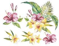 Große Satz-Aquarellsammlung mit tropische Betriebselementen - Blatt, Blumen Stockbild