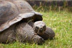 Große Schildkröte Lizenzfreies Stockfoto