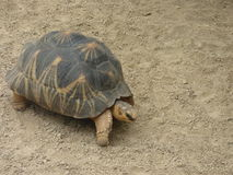 Große Schildkröte Stockfoto