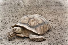 Große Schildkröte Lizenzfreie Stockfotos