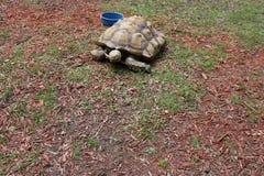 Große Schildkröte an einem Zoo Stockbilder