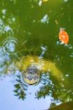 Große Schildkröte im tropischen Teichwasser stockbild