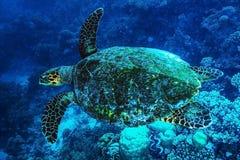 Große Schildkröte unterseeisch Lizenzfreies Stockfoto