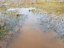 Große Schildkröte versenkt in schlammiges Wasser mit Anlagen im Feuchtgebiet stockfoto