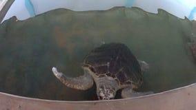 Große Schildkröten auf einem Bauernhof stock footage