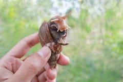 Große Schnecke in der Hand auf Naturhintergrund, Achatina-Schnecke am tha Lizenzfreies Stockbild
