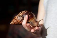 Große Schnecken Achatina-Fulica auf der Kind-` s Hand Lizenzfreie Stockfotos