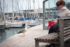 Große Seemöwe bleibt vor alter Frau am Seehafen von Barcelona-Stadt Stockfotografie
