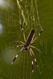 Große Spinne Stockfotografie