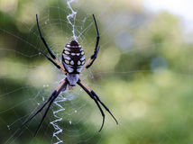 Große Spinne Lizenzfreies Stockfoto