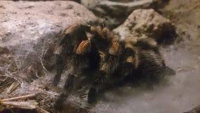 Große Spinne Stockbilder
