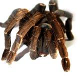Große Spinne 8 Lizenzfreies Stockfoto