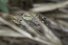 Große Spinne, die in seinem Netz sitzt Lizenzfreie Stockfotos