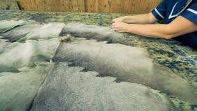 Große Stücke mit Pelz besetzt Material erhalten auf eine Liste des Sperrholzes genagelt stock video