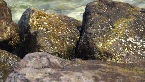 Große Steine auf dem Hintergrund, der Meereswellen spritzt Die Meereswogen, die mit brechen, spritzt auf nassen Felsen auf beachS stock video footage
