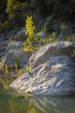 Große Steine und ein kleiner Baum auf der Flussbank Lizenzfreie Stockfotos