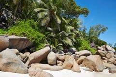 Große Steine und Palme, Seychellen Lizenzfreies Stockfoto