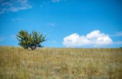 Große Steppe Lizenzfreie Stockfotografie