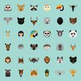 Große Tierfarbebene stellte auf Farbhintergrund ein Lizenzfreie Stockbilder