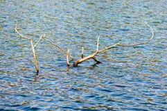 Große tote Baumaste im See Stockbild