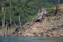 Große tote Baumwurzel im balahala stockfoto