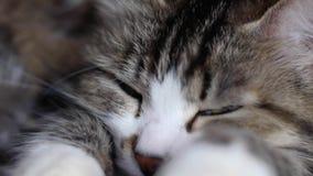 Große traurige rote Katze, die auf dem Fensterbrett liegt clip Schließen Sie herauf die traurige Katze, die zu Hause liegt stock video footage