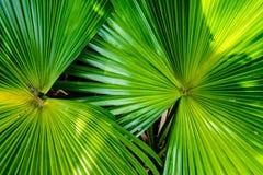 Große tropische Blätter Lizenzfreies Stockbild
