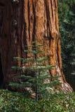 Große und kleine Bäume lizenzfreies stockbild