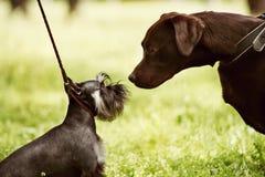 Große und kleine Hunde treffen im Park zusammen stockbilder